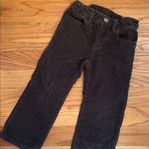 Gap Toddler Chords/pants